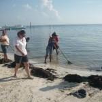 Limpieza de Playas en Broward