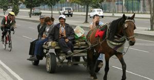 Zorras de Bogotá