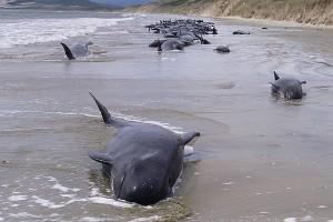 Ballenas muertas