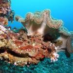 El cambio climático está disminuyendo los corales del Sur de la Florida antes de lo que se esperaba