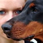 La detective de mascotas de la vida real en el Sur de la Florida