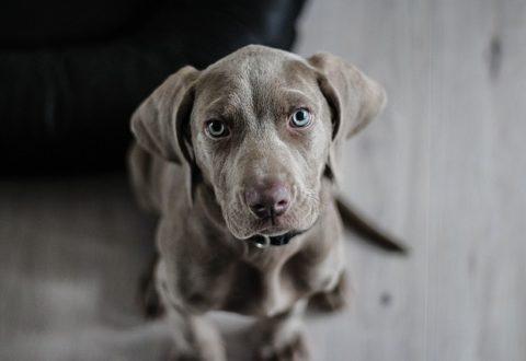 El problema de los perros abandonados en Miami Dade
